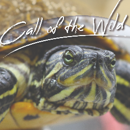 Call of the Wild Conference